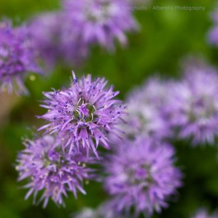 microflowers V