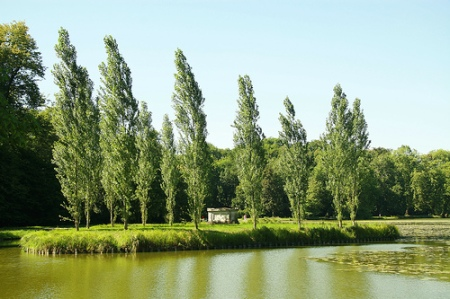Island of Poplars