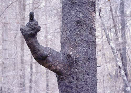 pissed off tree